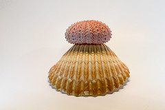 0SeaShells (1 of 1)-2 (HemboCondo) Tags: shells seashells shell snail scallop urchin