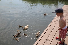 Go ducks; get those cheerios! (C. VanHook (vanhookc)) Tags: civicpark altoonaiowa