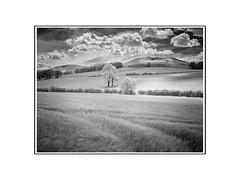 Quothquan Low Hill IR (Dylan Nardini) Tags: uk ir scotland nikon infrared lanarkshire d80 thankerton