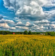 Mazowsze Na wsi (peterpj) Tags: clouds landscape nikon pano polska d800 lightroom wies 5018 mazowsze colorefexpro4 lynarzepolenpolska