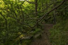 Uradalen - D8E_0753 (Viggo Johansen) Tags: trees sun green forest rocks path rogaland timekommune urdalen