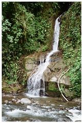 Nambillo 2 (Patrick J. Negwer) Tags: dog naturaleza verde green dogs nature water rio river waterfall ecuador agua perro perros cascadas mindo nambillo