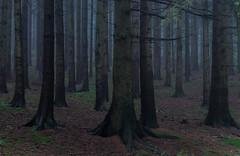 * (sedregh (on/off)) Tags: wet rain forest landscape eifel landschaft wald regen nass