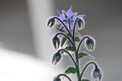 Garden (mathildepoupin) Tags: macro fleur nectar pollen abeille butiner insecte oranger lilas pommier pollinisation macrographie