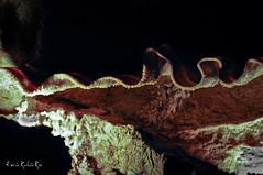 Lacave (enricrubioros1) Tags: frana cahors gruta perigord lacave espeologia