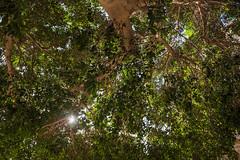 DSC_5811 (Pasquesius) Tags: sea tree museum island mare lagoon ficus sicily museo laguna albero saline sicilia saltponds isola marsala mozia mothia stagnone motya whitakerfoundation riservanaturaledellostagnone whitakerhall fondazionewhitaker casawhitaker