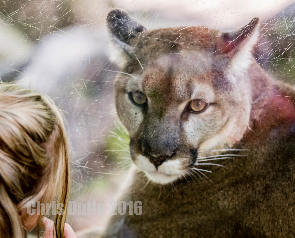 peak cougar women At the age of 24 he married, and he had six children he served in the army during the war following complete sexual abstinence for over a year, he encountered, while bathing, an elderly.