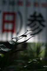Hibiya Park  (- yt -) Tags: park summer macro insect tokyo fujifilm   hibiya   xe1 industar61lzmc50mmf28macro
