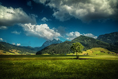 drive-by tree (Chrisnaton) Tags: blue summer mountains tree green nature clouds landscape switzerland outdoor bluesky hills lonelytree