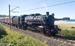 """Kiama Picnic Train"". 5917, on 8S03, runs past Bombo Beach on the final stage of the journey towards Kiama. South Coast Line, NSW, 29th May, 2016. (garratt3) Tags: aus rail steam lachlanvalleyrailway standardgauge kiamapicnictrain nswheritage steamloco railway railways locomotive australia nsw railfan steamlocomotive steampower nswgr illawarra southcoast newsouthwales 59class"