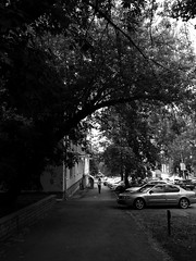 (nVa17) Tags: street city morning trees shadow summer blackandwhite bw woman tree blackwhite silent branches streetphotography stranger streetphoto perm bnw  blackandwhitephotography camera1
