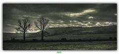 LE BOULONNAIS / AUDREHEM (régisa) Tags: audrehem landscape paysage panorama arbre tree colline hill boulonnais pasdecalais platinumheartaward elitegalleryaoi bestcapturesaoi
