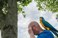 Me and my Bird (Michael Goldrei (microsketch)) Tags: street blue 3 bird london june st yellow canon photography photo photographer photos mark south iii bank parrot southbank 5d 16 jun 2016