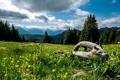 Sitting in the flower meadow and enjoying the live (Allgublog) Tags: sebastianschuon d7100 nikkor1024 nikon sommer frhling spring alpen alps mountain germany landscape europe allgu