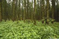FUTTERSTELLE IM WALD (PADDYSCHMITT.DE) Tags: bltter bume baum sommerwald grnerwald grnebltterimwald
