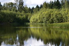 Green Timbers Lake (careth@2012) Tags: trees lake reflection nature water reflections scenery view scenic scene naturepark