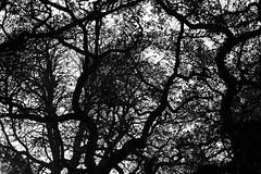 Rseau (Gerard Hermand) Tags: park winter sky paris france tree silhouette canon hiver ciel arbre parc bagatelle eos5dmarkii formatpaysage gerardhermand 1512090314