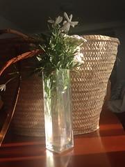 Me gusta poner unos jazmines... (Micheo) Tags: luz verano vase summertime iphone cesta jarron cesto jazmines