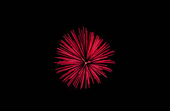 Lonely Firework (Luzgonell14) Tags: park photography jerseycity fireworks libertystatepark