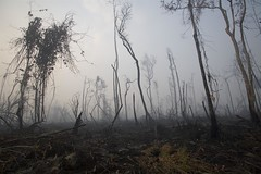 GP019CP (Greenpeacesuomi) Tags: trees indonesia rivers forestfires rainforests centralkalimantan mentangai