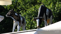 Restaurant roof cows - Volkspark Friedrichshain (luciwest) Tags: park roof berlin nature restaurant kuh cows dach friedrichshain prenzlauerberg videostill volksparkfriedrichshain inaberlinminute