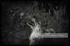 White wolf in Black and white Wolf in black and white (Daniel Hernanz Ramos) Tags: arcticowl whitewolf wolfhawking loboaullando canislupusarctos artisticanimalspictures wolfloboaullardogcanis wolfteeth wolftooth wolfwhite wolves fotografodeanimalsdanihernanz animalsphoto animalspictures amazinganimalpictures agressiveanimalpictures animaldetailpictures animalsfacetoface closeupanimalpictures artisticanimalpictures thebestpicturesofanimals copyrightdanihernanz madrid fotosartísticasdemadrid fotosdemadridenblancoynegro danihernanz nightpictures urbanpictures streetpictures danielhernanzfotografodemadrid blackandwhiteurbanpictures lasmejoresfotosdemadrid amazingurbanpictures artisticpictures beautifullandscapespictures mountainspictures ambientpictures ambiancepictures moodpictures pictureswithatmosphere artisticstreetpictures artisticurbanpictures artisticstreetcomposition cityambientpictures