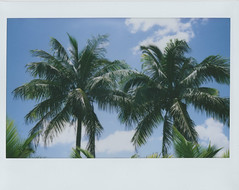 Palm trees (Jacob's Camera Closet) Tags: camera tree film fuji thomas palm instant edison instax 210