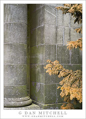 Column, Wall, and Dying Tree (G Dan Mitchell) Tags: park city usa brown tree green stone wall architecture oregon america print portland moss pacific northwest north stock masonry historic license column mansion needles dying municipal pittock