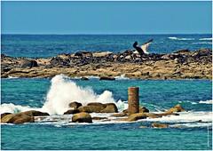 UL 048 (cadayf) Tags: seascape 22 seaside wave bretagne britanny paysage vague
