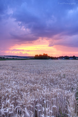 Sunset in the wheat field (Fred Photographie) Tags: sunset france nature field nikon raw normandie hdr champ d90 photomatix