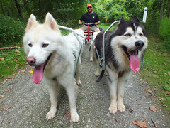 """The Lead Dogs Chase & Zarro • <a style=""""font-size:0.8em;"""" href=""""http://www.flickr.com/photos/96196263@N07/9361567114/"""" target=""""_blank"""">View on Flickr</a>"""