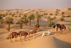 Algrie , le tourisme du dsert -  ,   (menosultra) Tags: africa sun tourism algeria google desert image south north images oil algerie alg tuareg algerian dsert alger   timimoun algerians    algrien  lalgrie