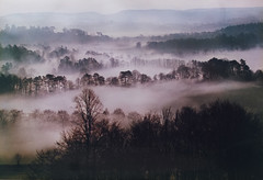 A Misty Moisty Morning (alanpeacock2) Tags: autumn trees mist fog landscape