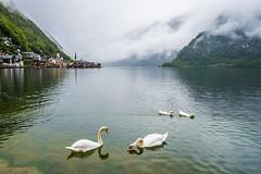 Hallstatt (Gin-Lung Cheng) Tags: austria europe hallstatt lake landscape location upperaustria activity travel unesco world