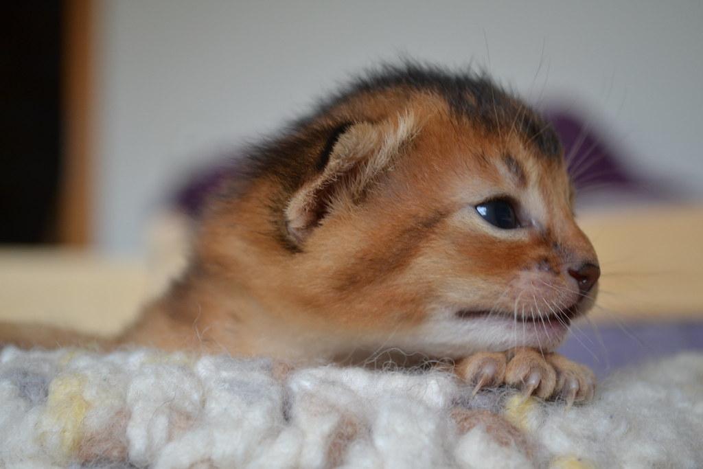 生まれたての子猫の横顔