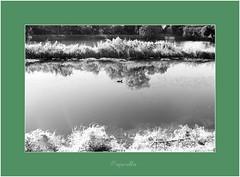 paperella (Dona.tello) Tags: ticino acqua canale villoresi 21100