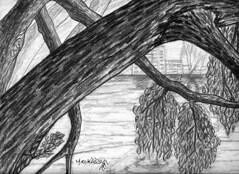 دراسة بالقلم الرصاص 03 (Hossam ElKady) Tags: life art nature pencil landscapes still drawing egypt sketches فنان حسام hossam رسم hosam الرصاص فنون القلم رسام elkady القاضى تشكيلى حسامالقاضى القلمالرصاص elkadi
