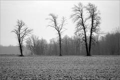First Frost (joeldinda) Tags: trees bw field frost raw roxand joeldinda 1v1