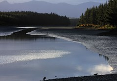 Blues, Pines and Water (Tones Corner) Tags: reflection river nzscene 60d nzbeauty