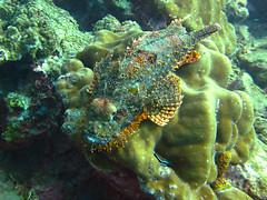 IMG_2042 (Net Diver) Tags: travel nature coral thailand island alpina diving padi phuket reef вода природа отель путешествия owd остров обучение rachayai 2013 kohrachayai тайланд риф пхукет открытая коралловый andamanian