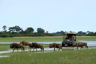 Botswana Okavango Delta Photo Safari 55