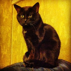 Статуй кошачий с глазами #cat #cats #pet #petstagram #kitten #kittens #catstagram #cutie #pets #kitty #catlovers #catsofinstagram #animal #sweet #funpetlove #catlover #ilovemycat #ilovemypet #instapets #petsagram #picpets #instacat #love #tagsta #tagsta_n (www.todleho.com) Tags: pet cats pets love nature animal cat kitten sweet kitty kittens cutie ilovemycat ilovemypet кошка кот с catlovers catlover глазами кошачий instagram ifttt tagsta petsagram petstagram catstagram catsofinstagram instacat tagstanature picpets instapets funpetlove статуй