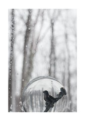 Home (Michael Ast) Tags: winter snow bird window rain woods backyard perched familyroom drizzle barebranches michaelast vision:text=0509 vision:outdoor=0861 homeglobe