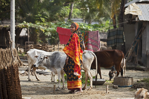 A woman with livestock in Khulna, Bangladesh. Photo by Felix Clay/Duckrabbit, 2013.