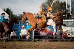 Falling (David Tao Photography) Tags: cowboy falling rodeo queanbeyan