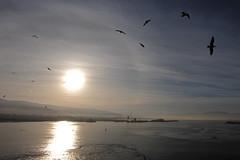 industrial gulls