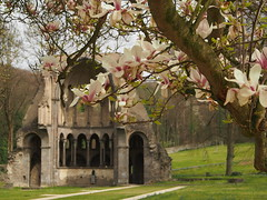 Chorruine Heisterbach (StephanieMller) Tags: abbey ruin ruine romantic cistercian knigswinter romantik siebengebirge abtei zisterzienser heisterbach klosterheisterbach klosterruineheisterbach