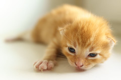 флегма (©Andrey) Tags: red cat kitten sony small gatto rx1