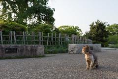 (GenJapan1986) Tags: animal japan cat kyoto   25mm 2014     nikond600  zf2 distagont225