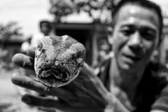 Vietnam, snake (alexander.ess) Tags: world street new city trip light portrait people blackandwhite bw black color animal night canon germany landscape photography photo nikon raw fuji photos swiss sony streetphotography olympus moment tog carlzeiss